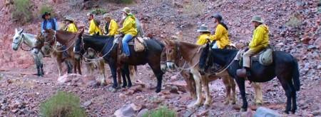 Grand Canyon Mule Rides