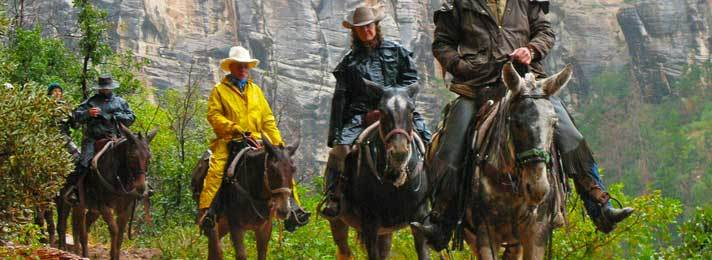 North Rim Mule Ride